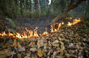A planned fire set by forest officials to burn the dry tree leaves in Amsoi reserve forest in Nagaon district, Assam, India. A global study released this week shows fires diminish forest density and tree size, making woods likely to capture less carbon.