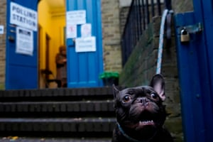 A French bulldog tied up outside St John's parish hall polling station in London