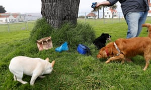 A dog owner and pets at the rally site. Protesters had organized to fill the field with dog feces in anticipation of the event.