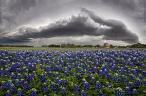 Shelf cloud over a field of bluebonnets in Round Rock, Texas