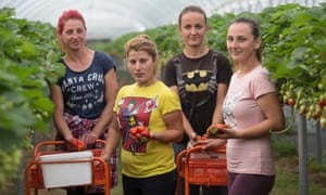 Afize Yuseinova, right, and her fellow Bulgarians on Langdon Manor farm, are among the dwindling number of European workers happy to stay in Britain.