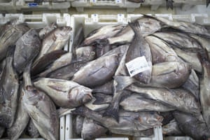 Fish is displayed for merchants inside Dakhla's main port