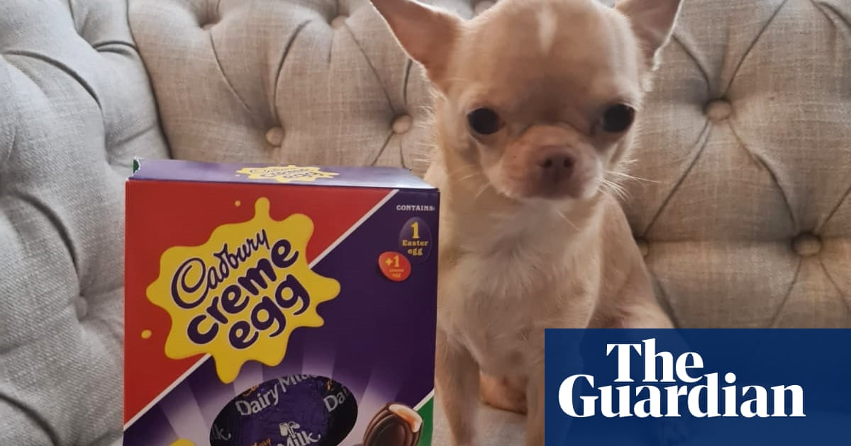 Death by chocolate: Kennel Club in Easter warning to dog owners