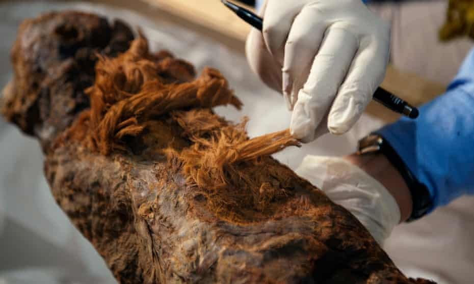 A scientist                  examines the Khuwy mummy, discovered in 2019.