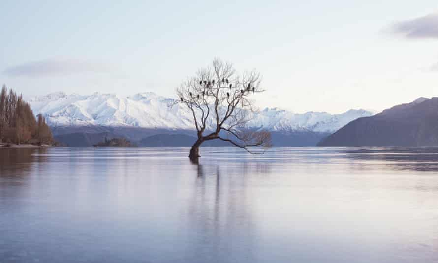 A tree pictured in the middle of Lake Wanaka, New Zealand