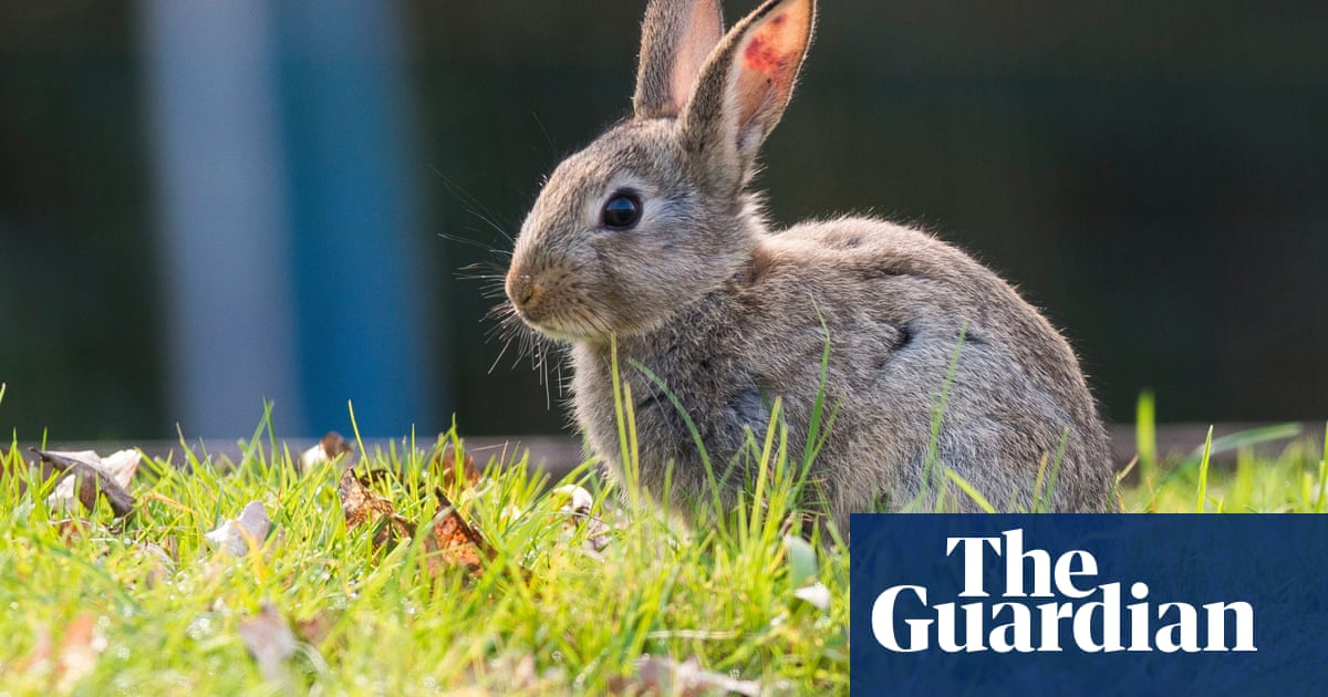 Romans in Britain and Welsh rabbits