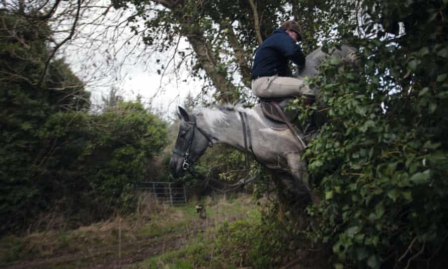 man seated backwards on a horse