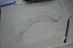 Seals sketch