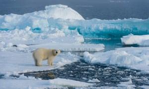 A polar bear on melting ice