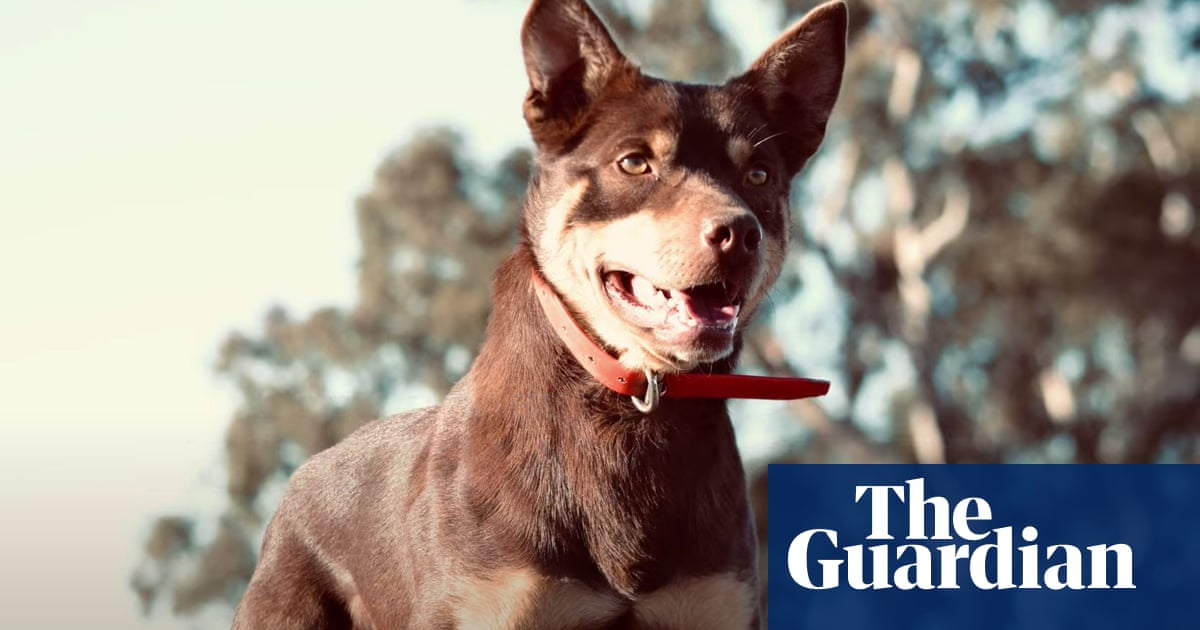 Watch the world's most expensive working dog in action – video