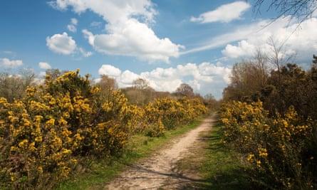 Spring on Greenham Common, near Newbury