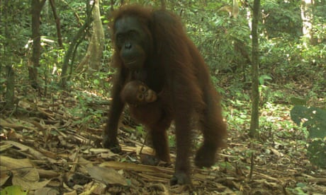 Caught in the act: camera traps snare rarest species - in pictures