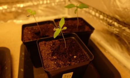 A few of Barton's fledgling plants.