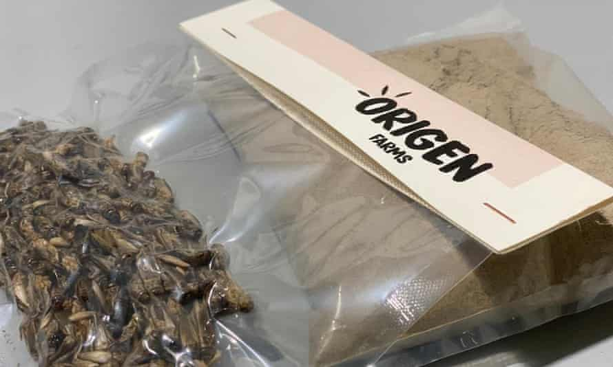 Processed crickets and insect flour from Origen Farms.