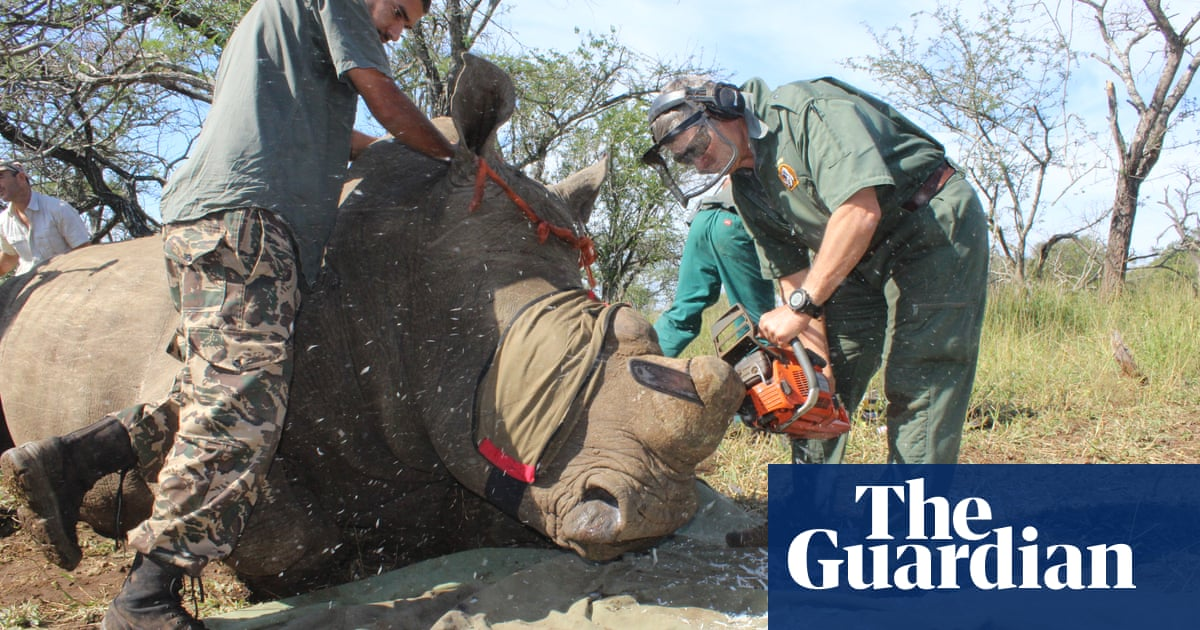 How chopping off their horns helps save rhinos from poachers