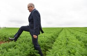 The prime minister, Scott Morrison, at Premium Fresh farm, 9km west of Devonport in Tasmania