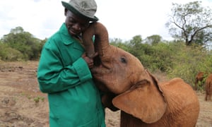Elephants are increasingly dependent on humans for survival.