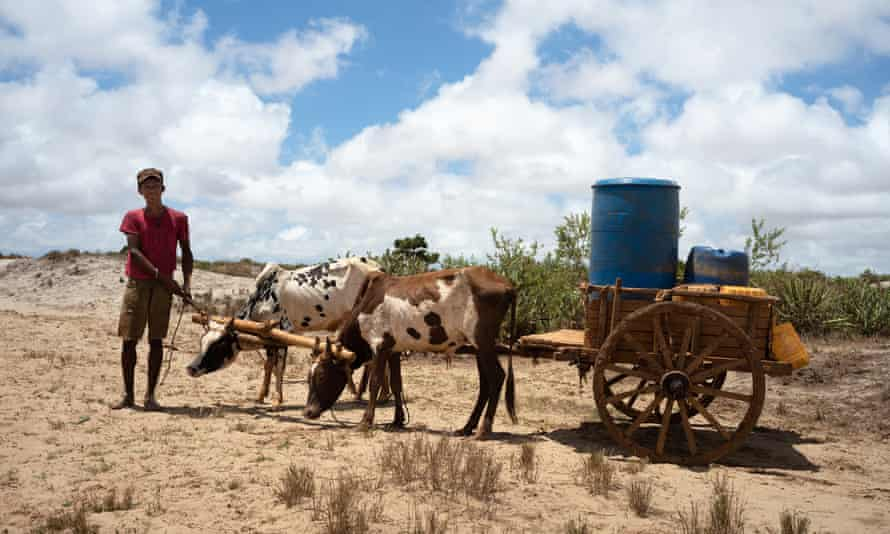 Youth with water buckets on cart pulled by two thin cattle in arid landscape