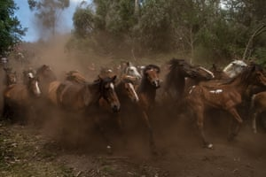 Wild horses are herded down from the mountains for the annual Rapa das Bestas (shearing of the beasts) festival in Pontevedra, Spain.