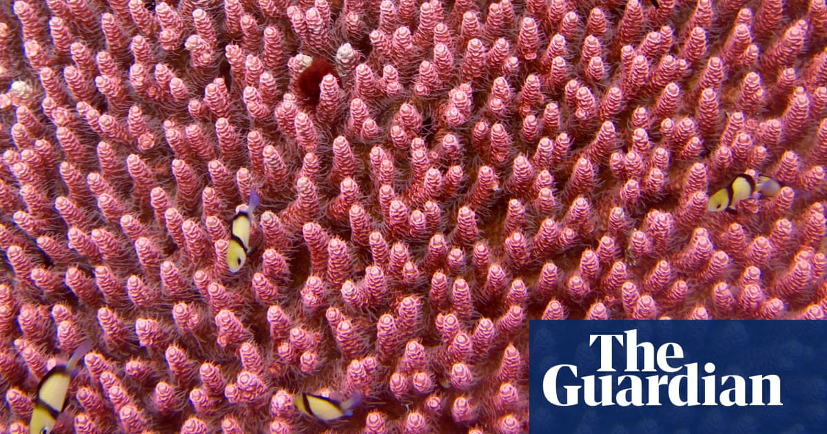 Global coral cover has fallen by half since 1950s, analysis finds