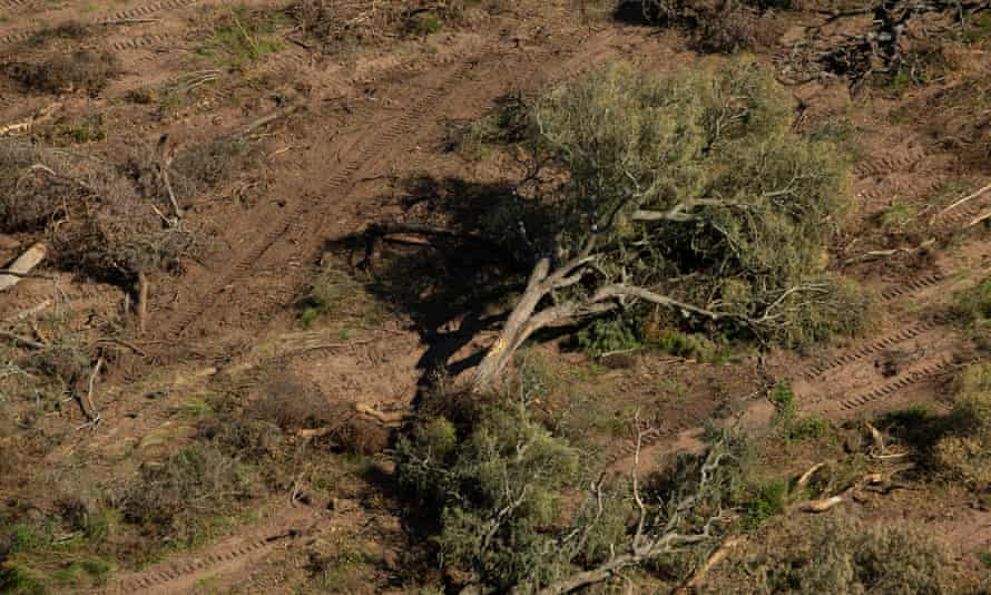 Aerial view of deforestation in Chaco, Argentina, 19 and 20 February 2019