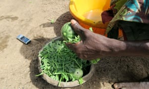 A soup of unripe watermelon and leaves being prepared as the sole meal of the day in Fombe