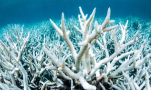 A damaged coral reef