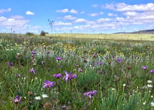 A diverse native grassland at Bibbenluke Common, Monaro region, NSW.