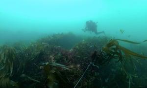 Diver exploring sea
