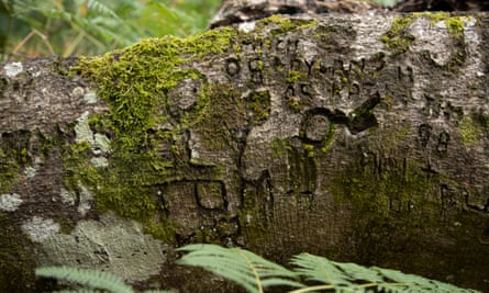 A fallen tree is seen covered with initials and names in the New Forest national park