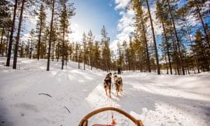 Dogsledding near Saariselka, Finland.