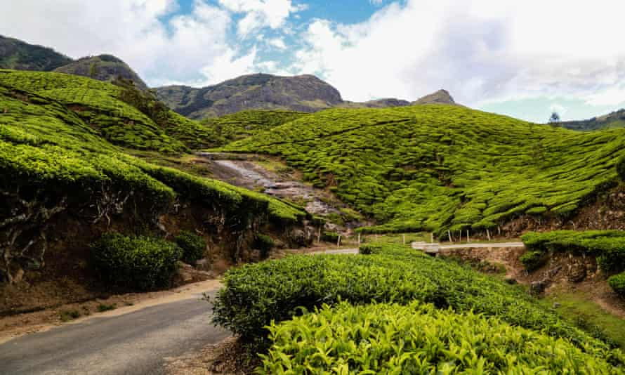 The Valley of Munnar.