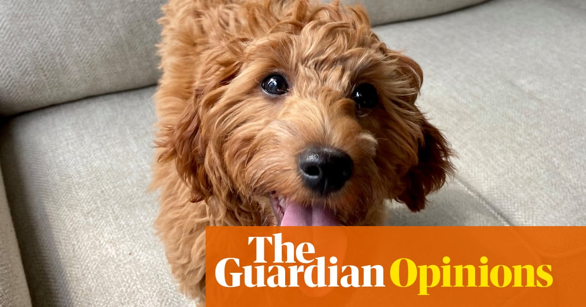 First it was sourdough, now it's a puppy – I am a lockdown cliche
