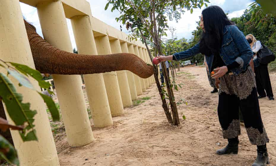 Cher visiting Kaavan the elephant in his new home in Cambodia, December 2020