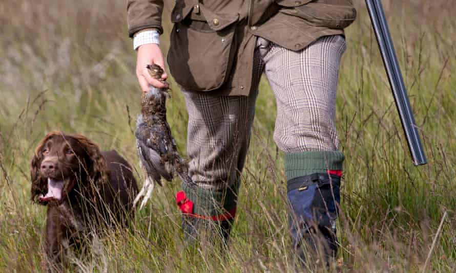 Dog, dead grouse and hunter