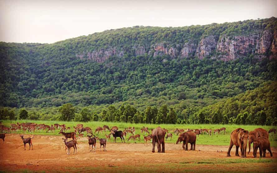 Elephants and deer before a fire breaks out in Smilepal National Park
