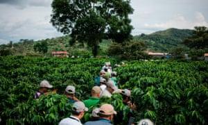 A coffee farm in Costa Rica
