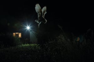 Barn owl hunting by house by Jamie Hall, Suffolk, England