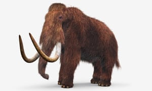 Model of Wooly Mammoth (Mammuthus primigenius)
