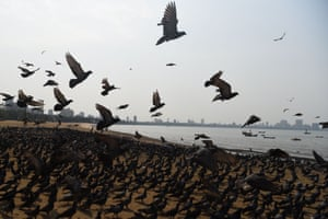 Birds gather on the usually busy Chowpatty beach, Mumbai, on the first day of lockdown in India.