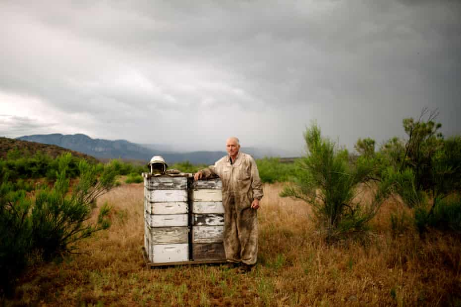 Beekeper Dennis Arp stands for a portrait near a colony of honey bees outside Rye, Arizona.