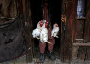 A man carries roosters for sale