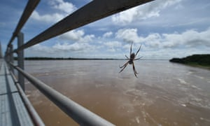 A spider sits in its web on Burdekin Bridge watching floodwaters which have risen some 10 metres in the Queensland town of Ayr on 30 March 30, after the area was hit by Cyclone Debbie.