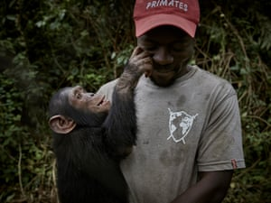 Caretaker Ephraim Ngiribwa tends to baby orphaned chimpanzees at Lwiro Primate Centre. Chimpanzees in DRC are threatened by deforestation and poaching. Poachers will often kill a chimpanzee family for bushmeat and capture infants for sale, deeply traumatising them
