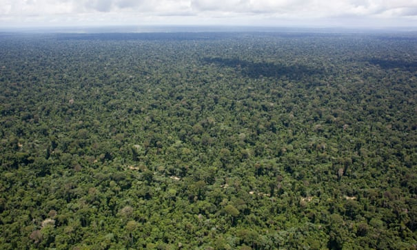 Wild Amazon faces destruction as Brazil's farmers and