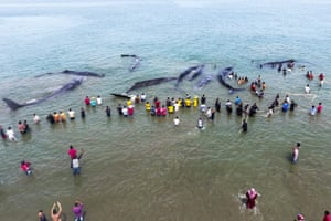 An aerial view of the stranded sperm whales Ujong Kareung beach