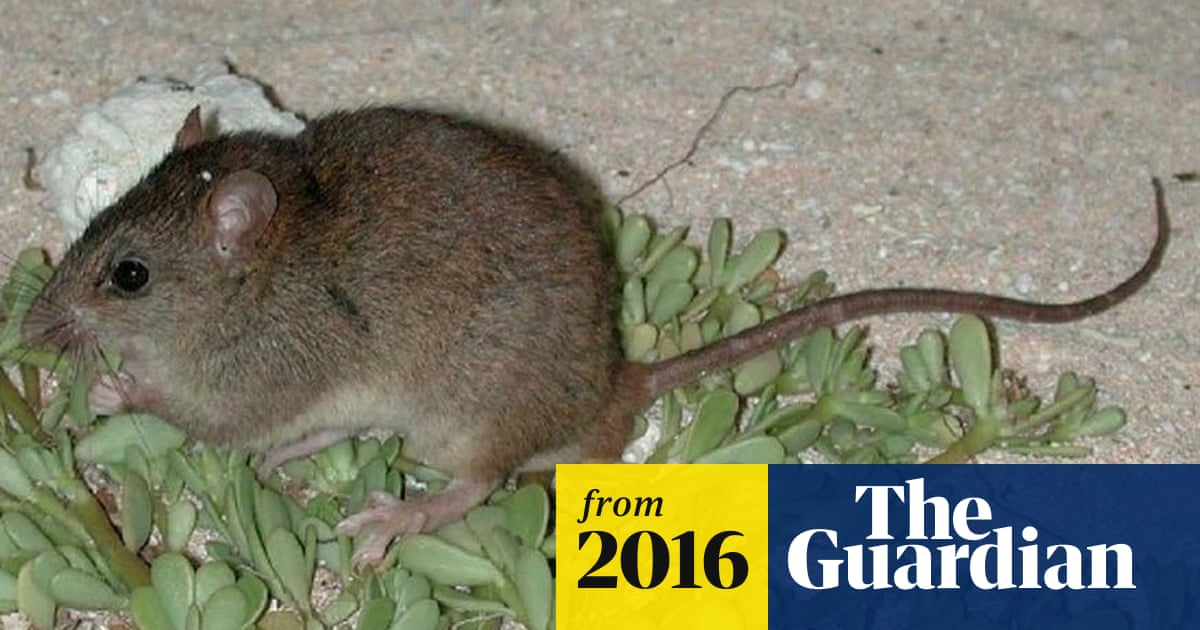 Revealed First Mammal Species Wiped Out By Human Induced