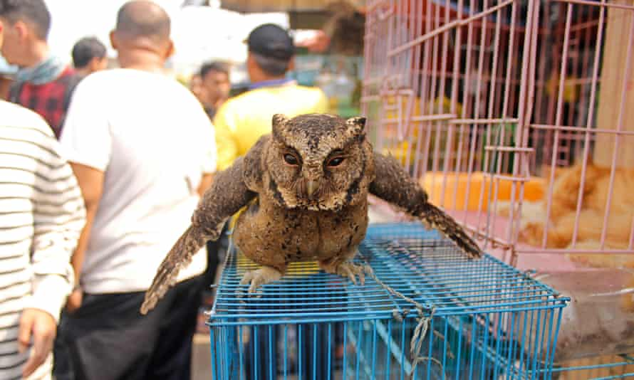 Owl at bird market in Jakarta.