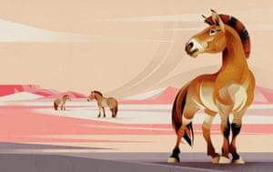 Przewalkski's Horse