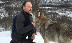 Rushby meets wolf at Polar Park, Norway